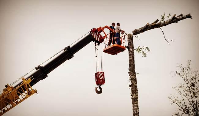 Обрезка деревьев с помощью бензопилы